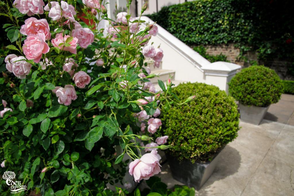 4-EdenGardens-Garden Design London